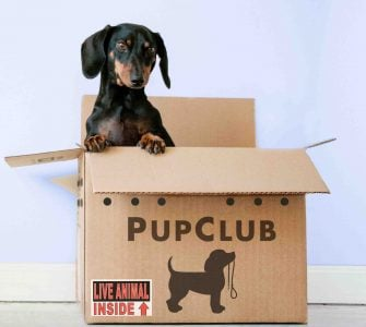 Dog in delivery box