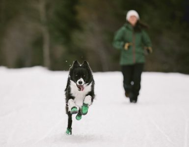 Dog wearing dog boots running in snow