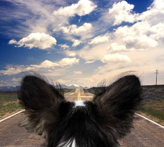 Dog looking ahead on open road