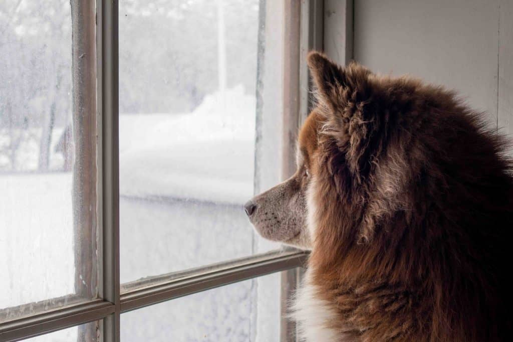 dog looks outside through window of house