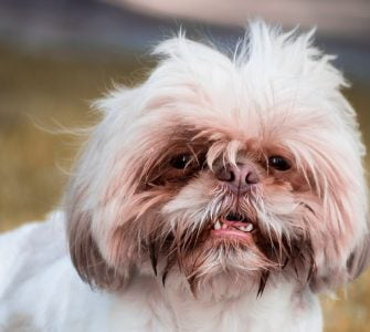 dog with mouth open
